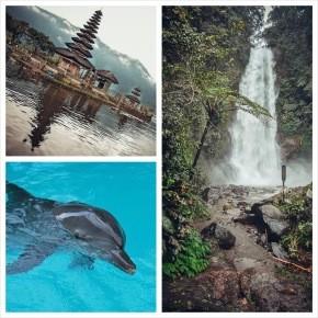 На север к дельфинам