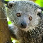 Балийский зоопарк