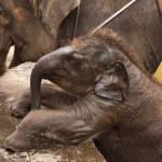 Парк слонов Таро