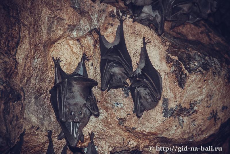 храм пещера летучих мышей - Гоа Лава, о.Бали